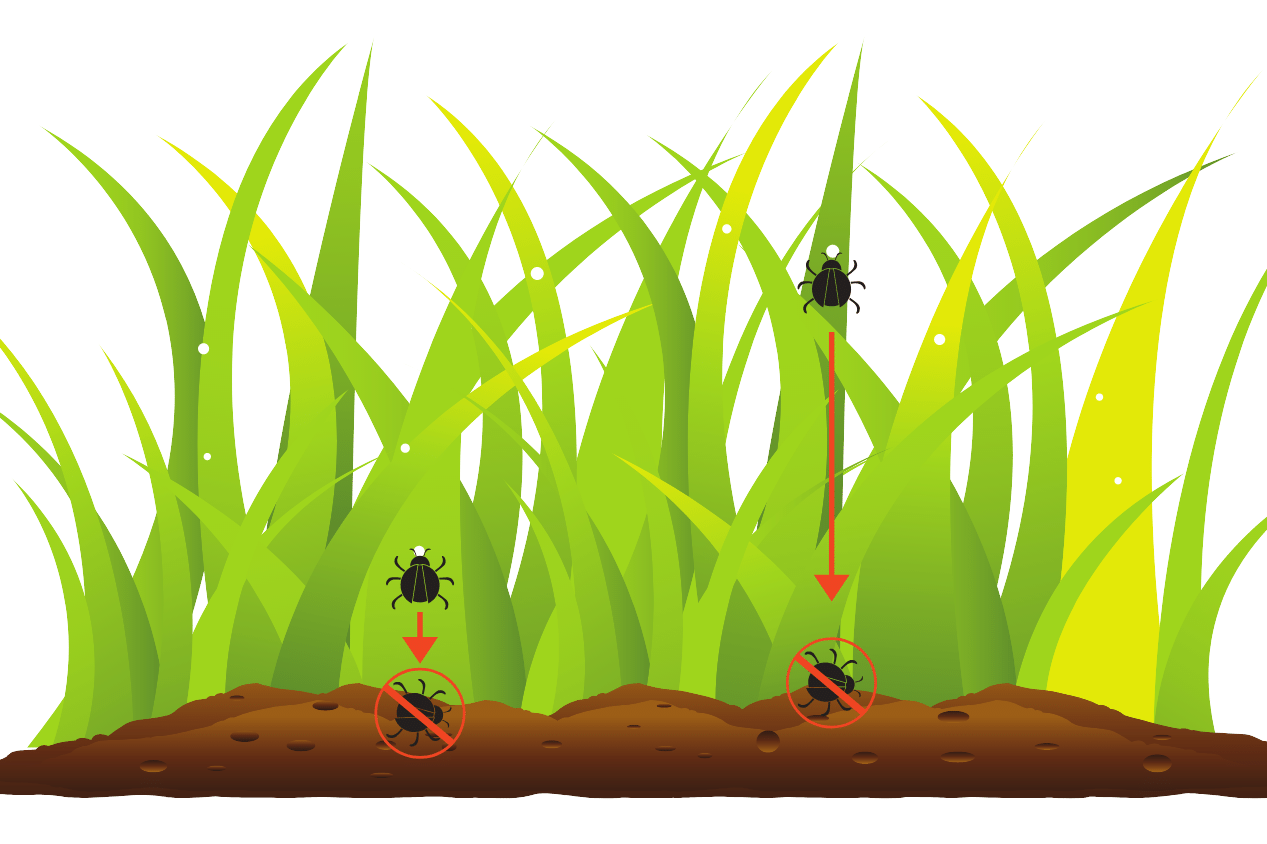 diagram of how systemic insect killers for lawns work