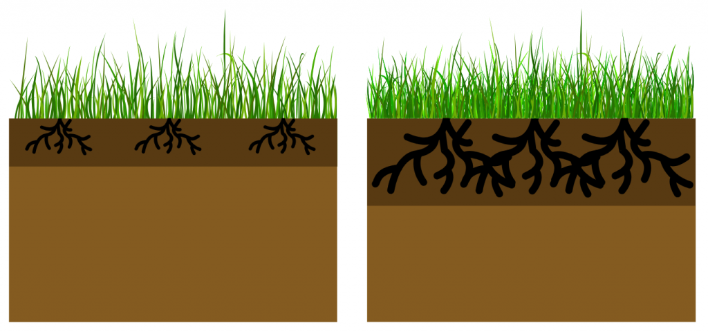 two sets of grass one with shallow roots and one with deep roots